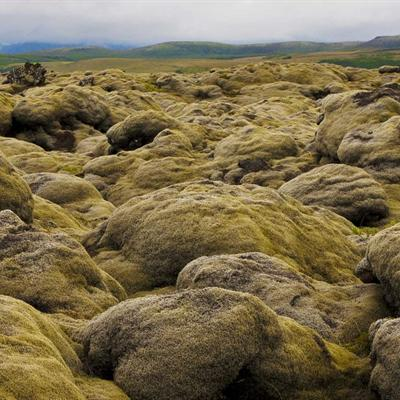 Lava Field in Iceland